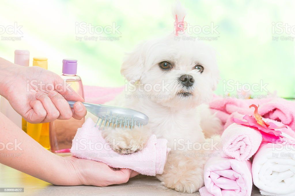 Little dog at spa stock photo