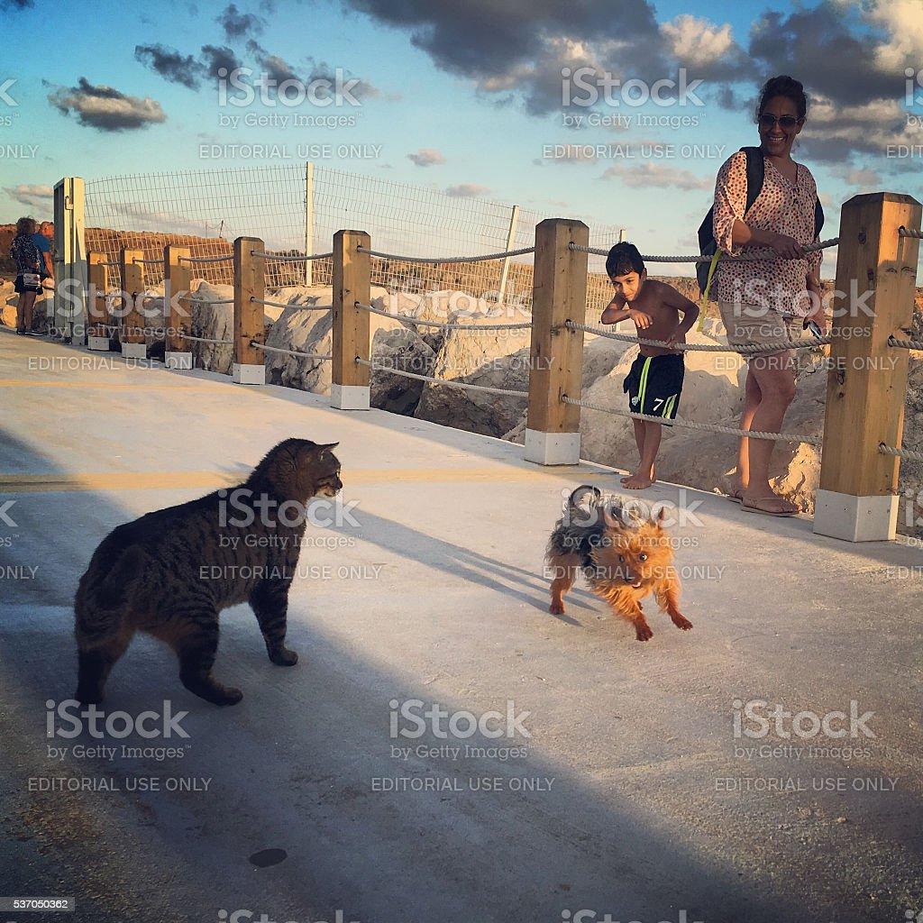 Little dog attacking cat on Herzliya Marina Promenade stock photo