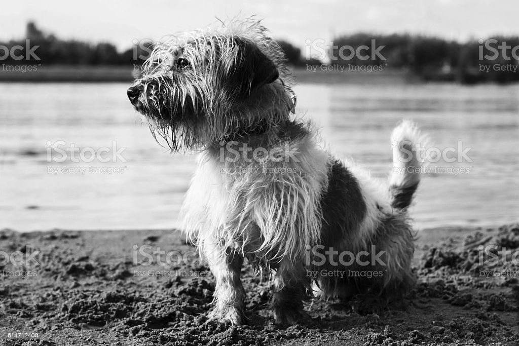 Little dog by the beach stock photo