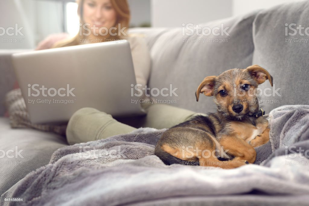 Little dog on sofa with owner stock photo