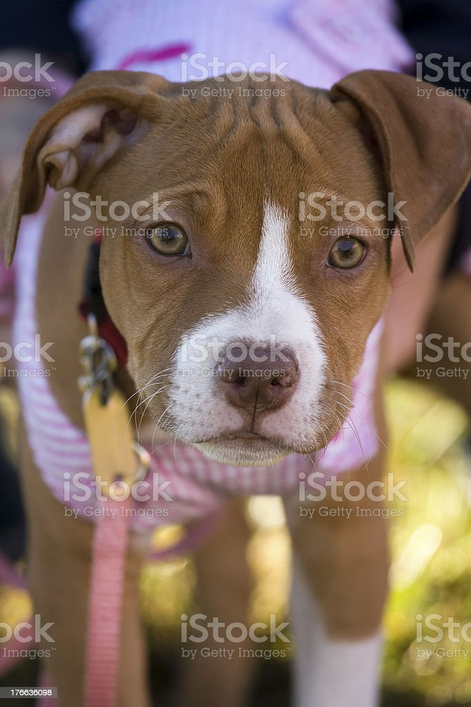 Little dog stock photo