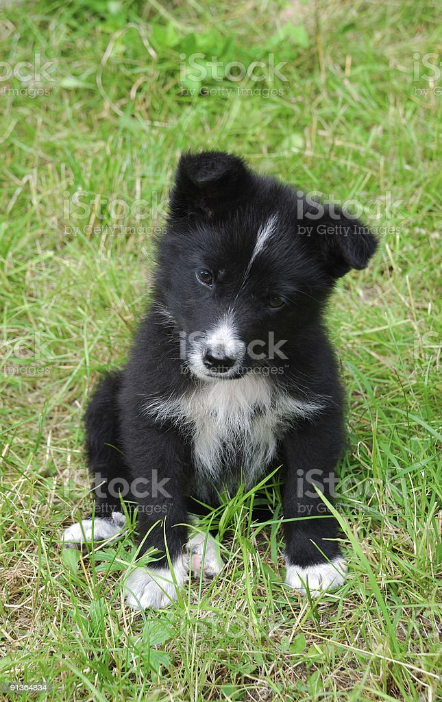 Little dog. Puppy on green grass. royalty-free stock photo