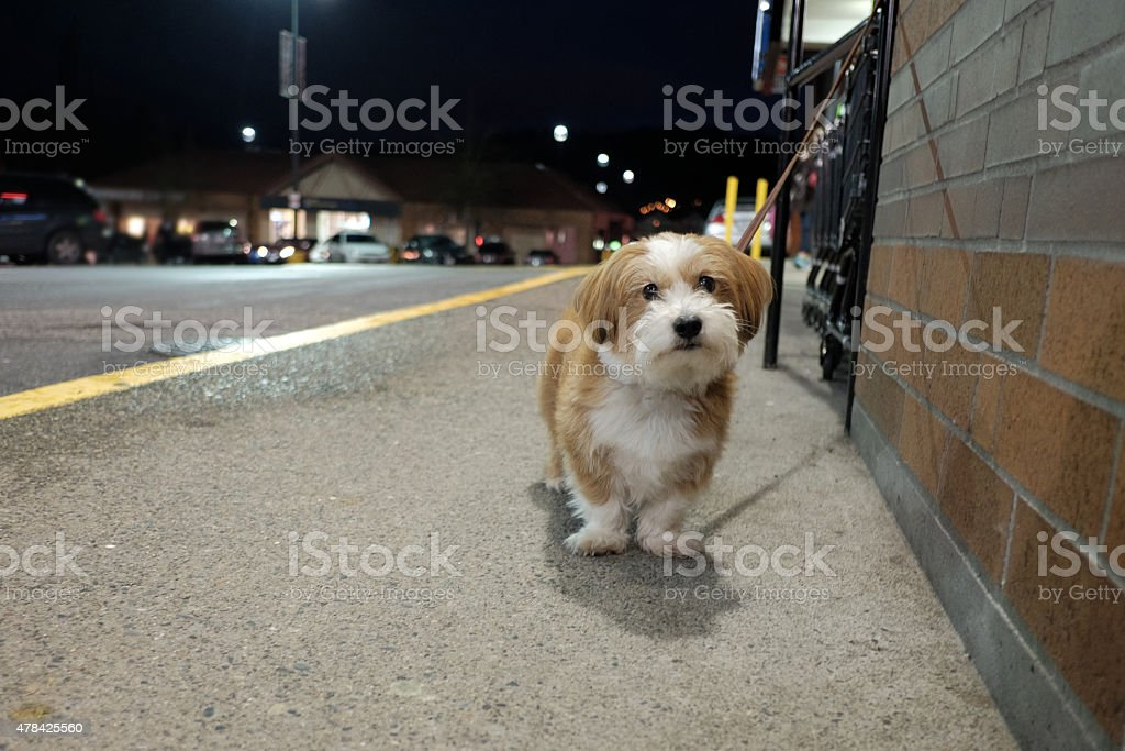 Little dog waiting for its owner royalty-free stock photo