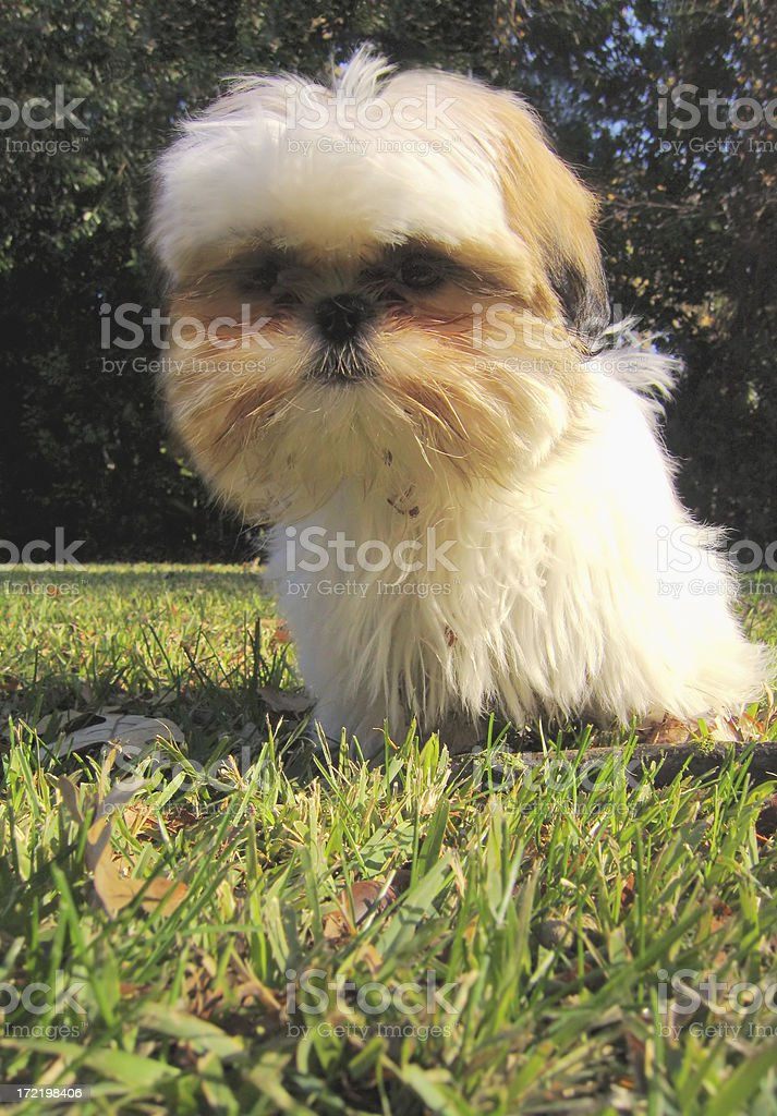Little Doggie royalty-free stock photo
