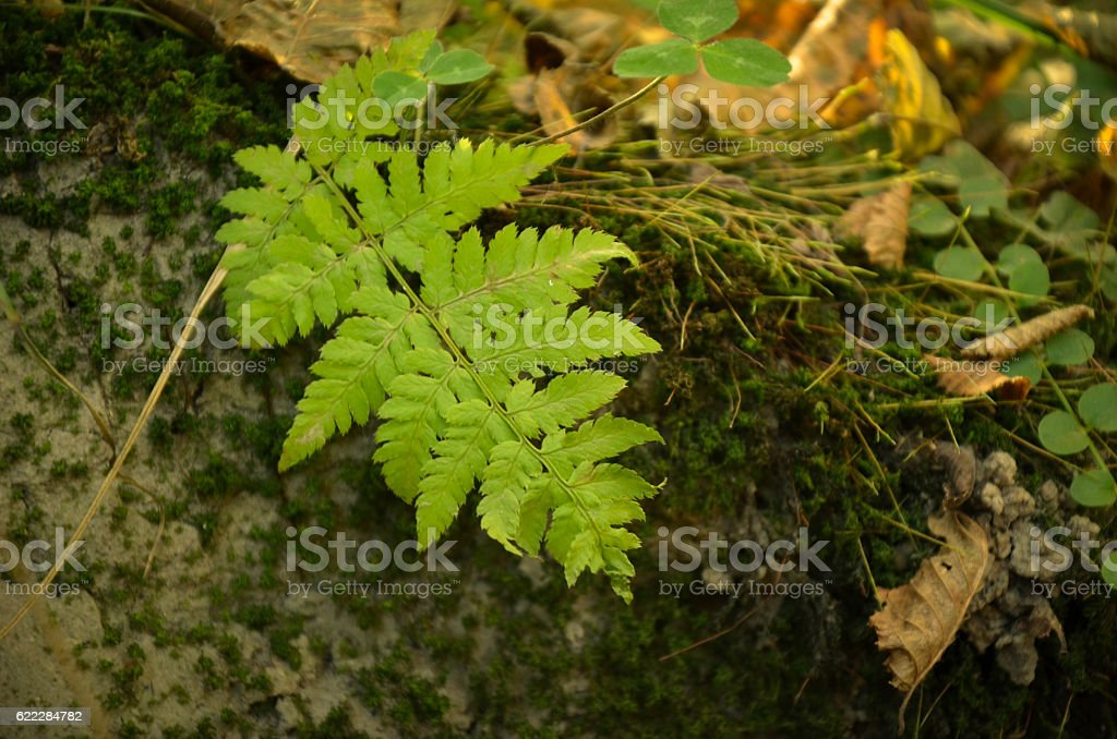 Little fern leaves exuberant and lush on moss background. stock photo