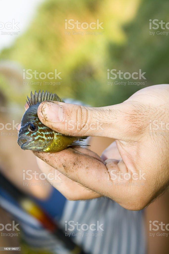 Little fish royalty-free stock photo