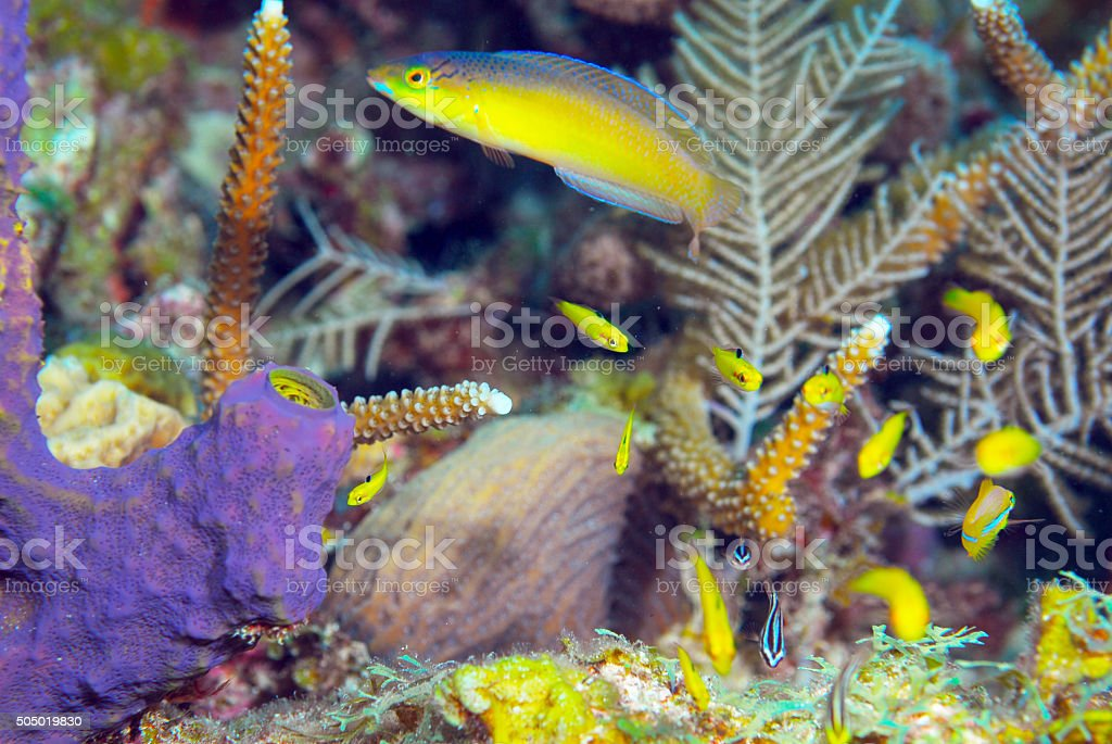 Little fishes under water near coral reef patchs stock photo