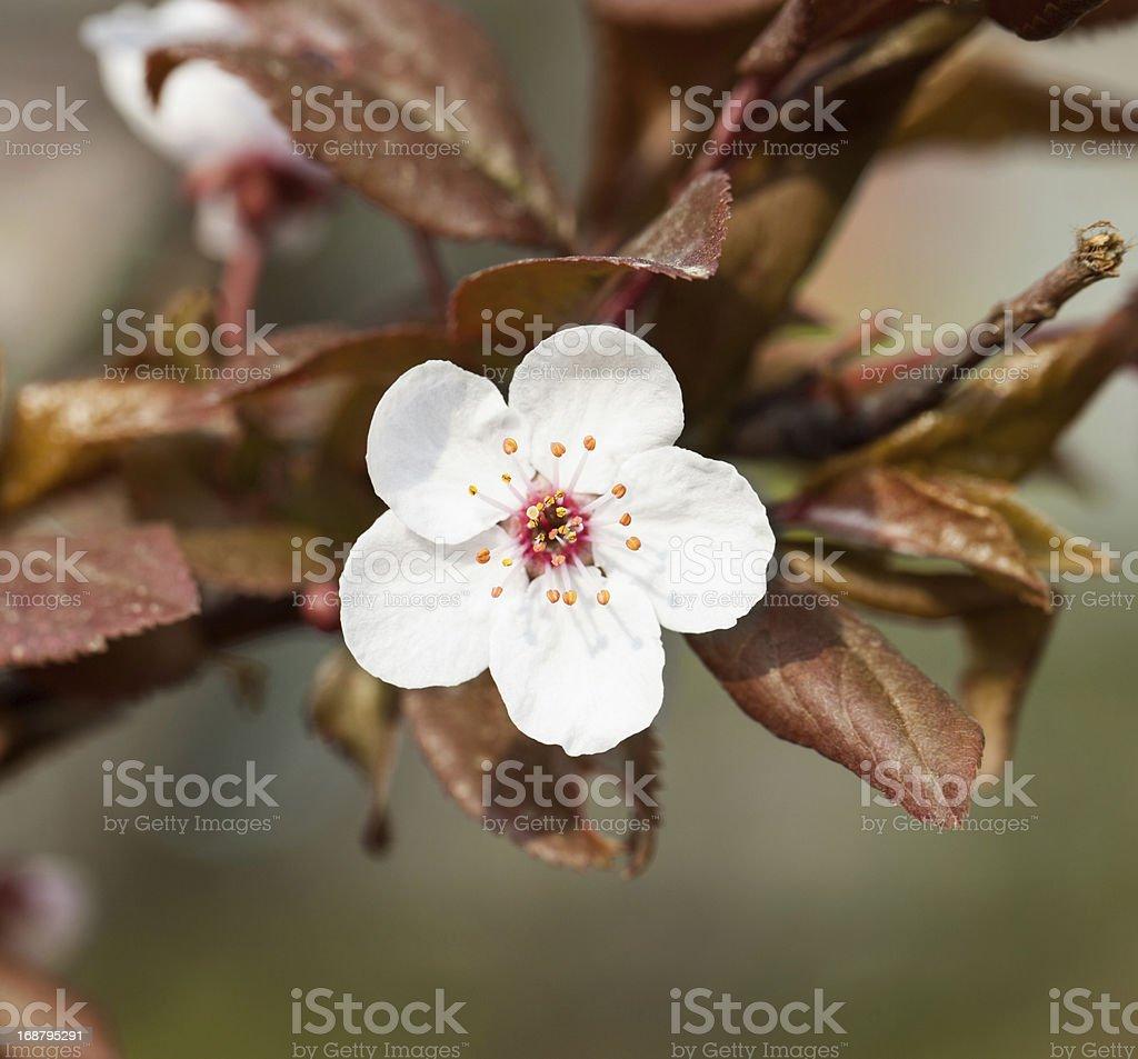 Little flower royalty-free stock photo