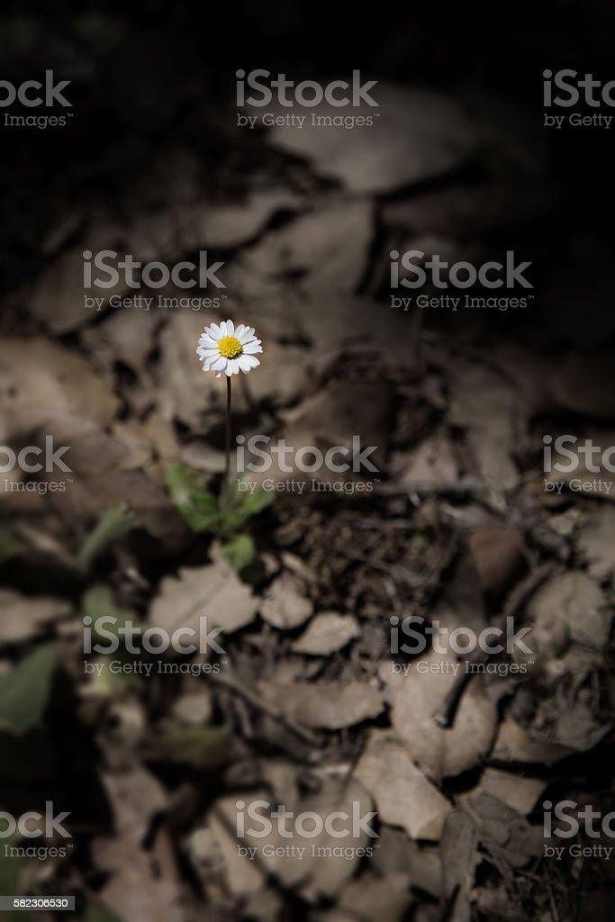 little flower stock photo