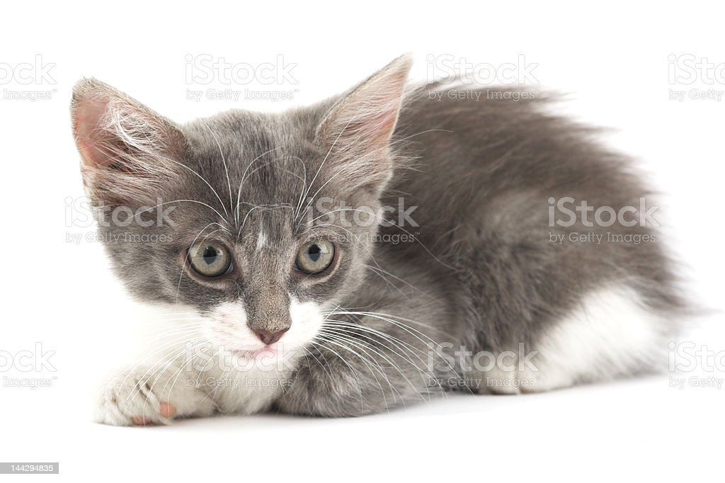 little fluffy thing stock photo