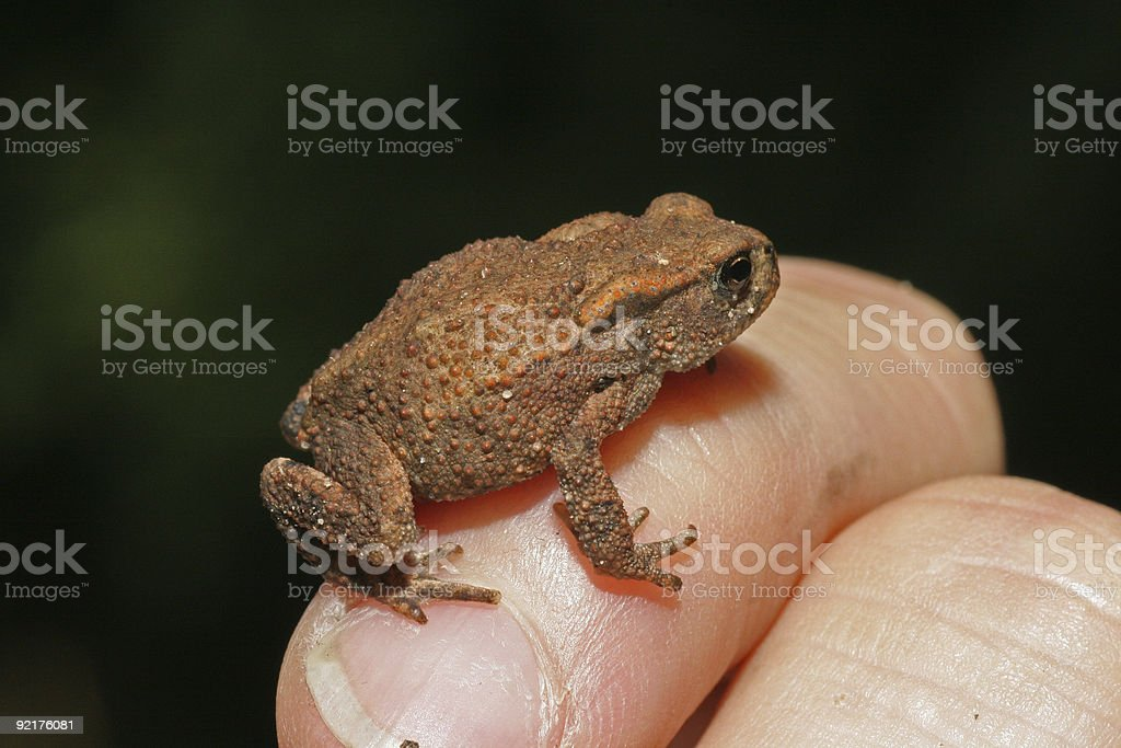 Little frog on hand stock photo