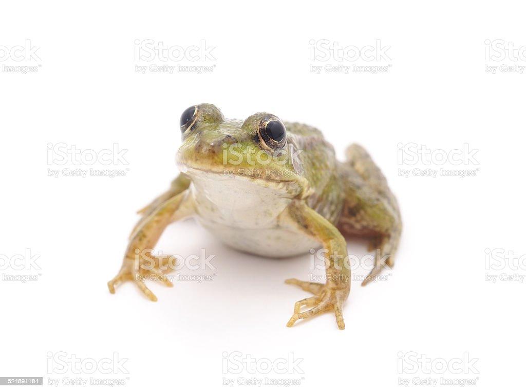 Little frog. stock photo
