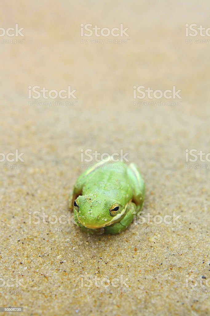 Little Froggy stock photo