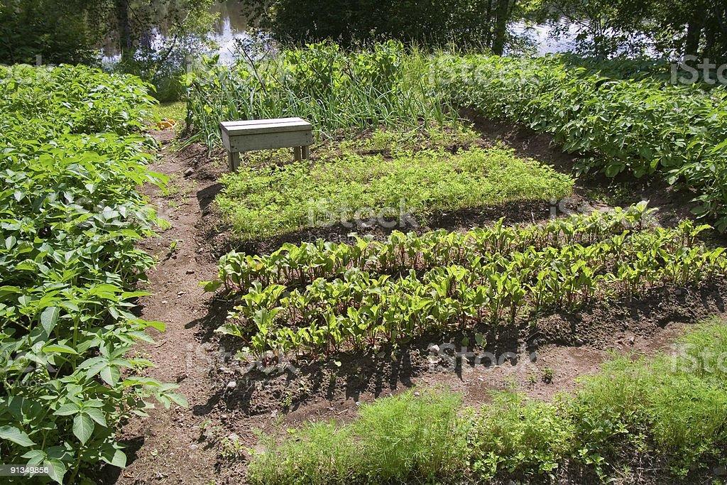 Little garden royalty-free stock photo