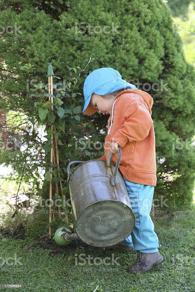 little gardener stock photo