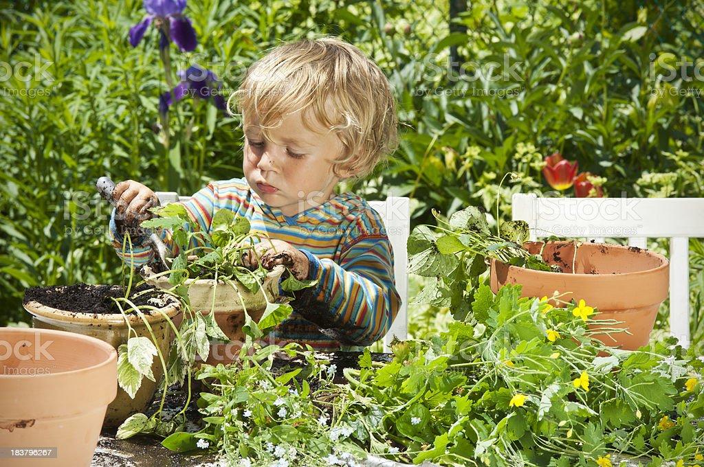 Little gardener royalty-free stock photo