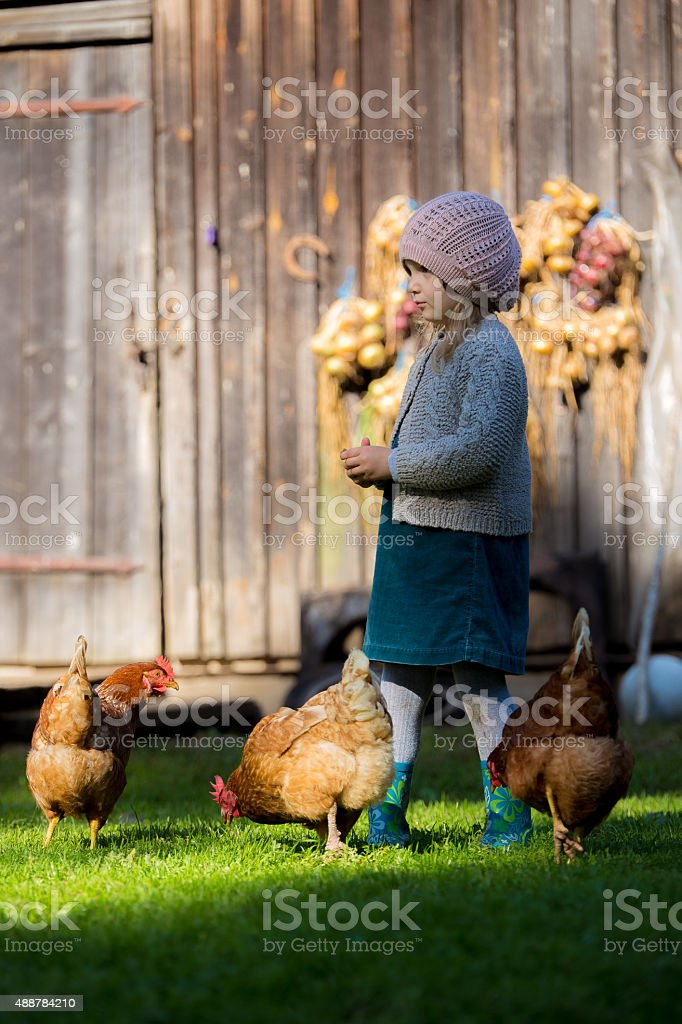 Little girl and chickens stock photo