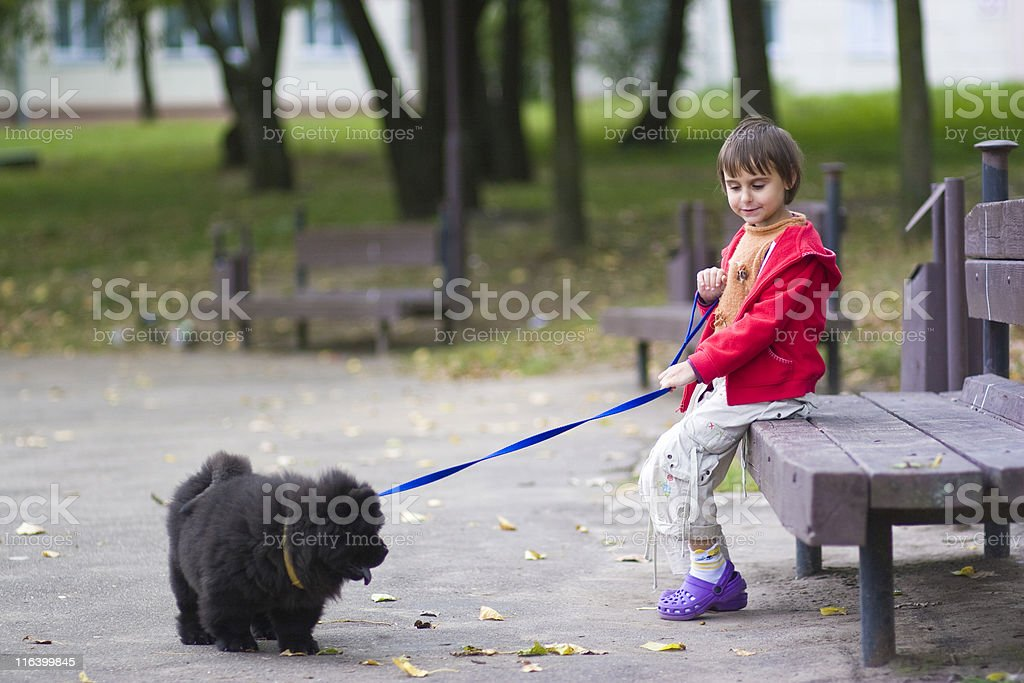 little girl and chow-chow stock photo