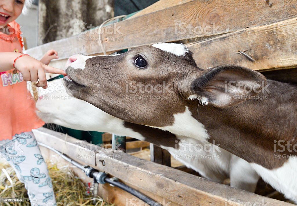 Little girl and cow on farm stock photo