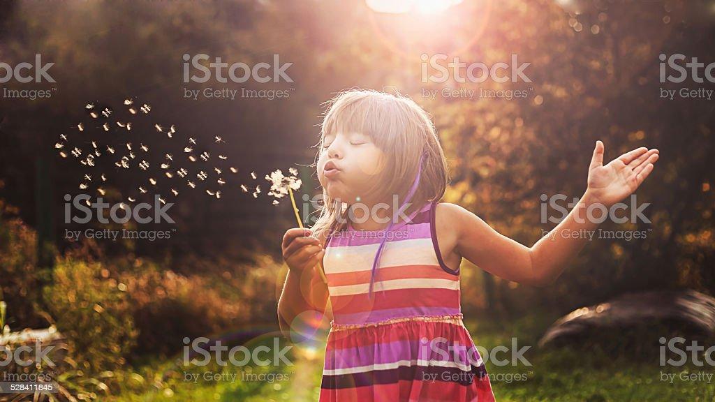 little girl and dandelion stock photo