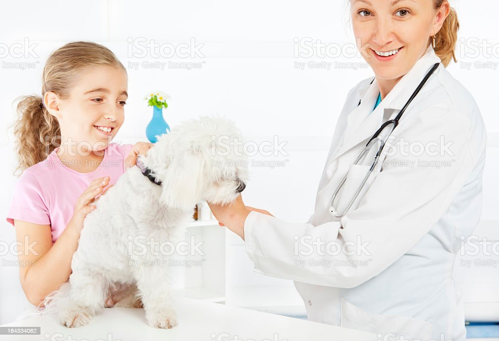 Little Girl and her pet Maltese Dog at veterinary office royalty-free stock photo