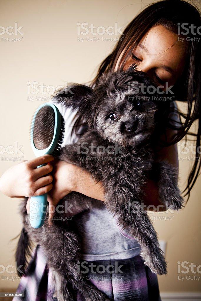 Little Girl Brushing Her Puppy Dog stock photo