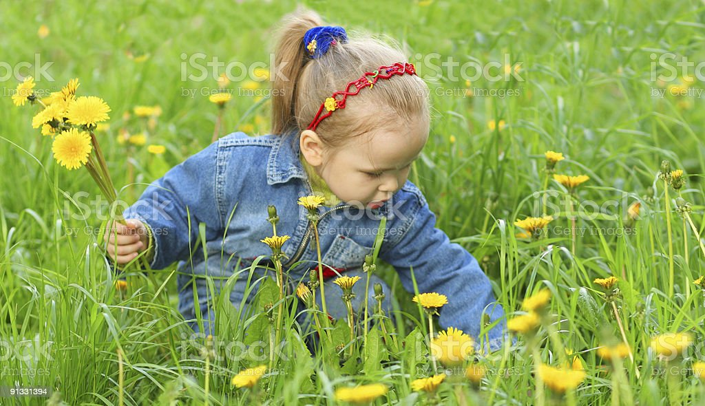 Little girl collect flowers royalty-free stock photo