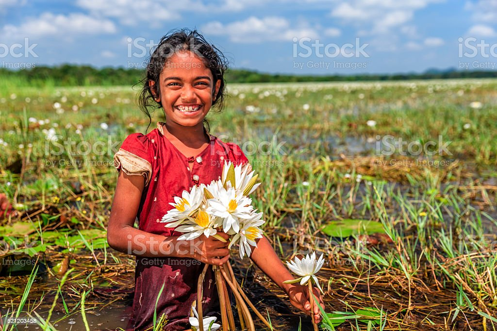 Little girl collecting lotus flowers, Ceylon stock photo