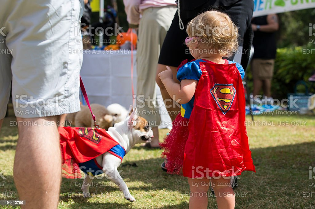 Little Girl Dressed as Supergirl along with a French Bulldog stock photo