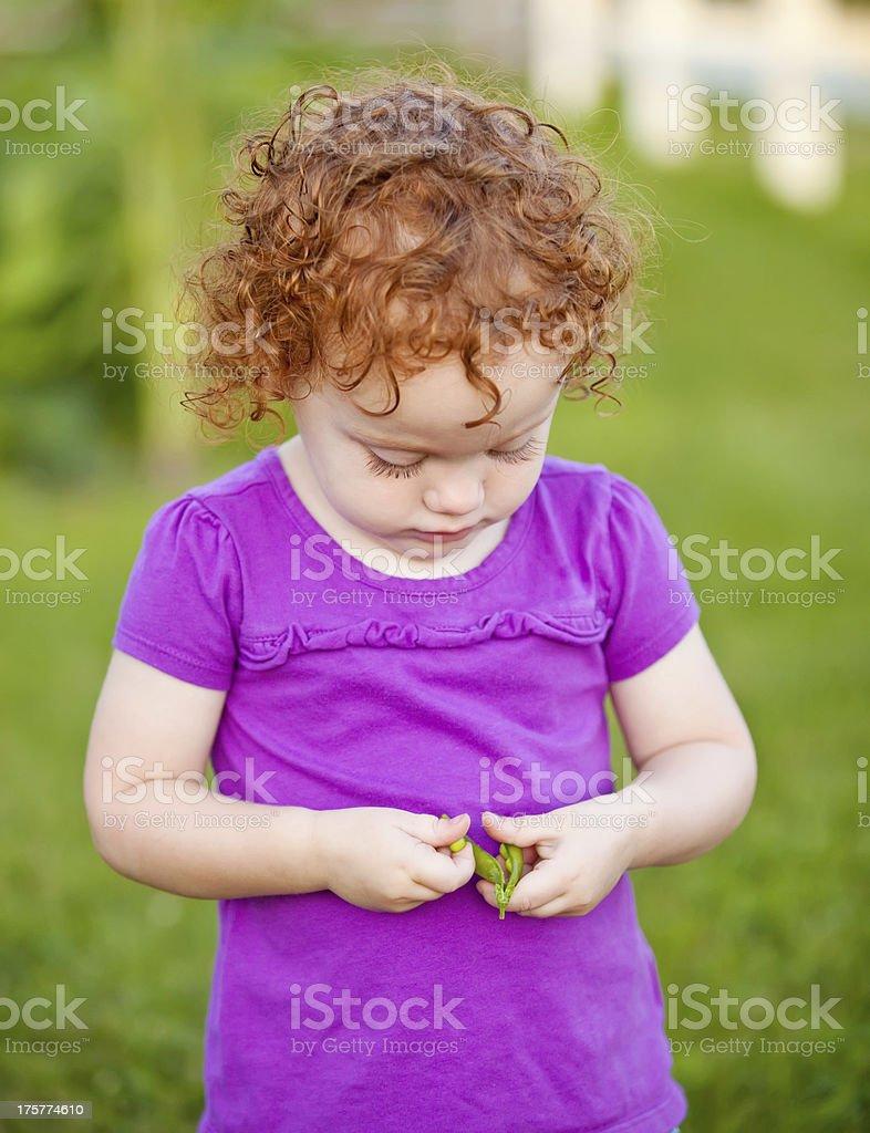 Little Girl Eating Fresh Peas from Garden royalty-free stock photo