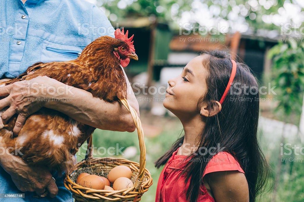 Little girl enjoying a hen stock photo