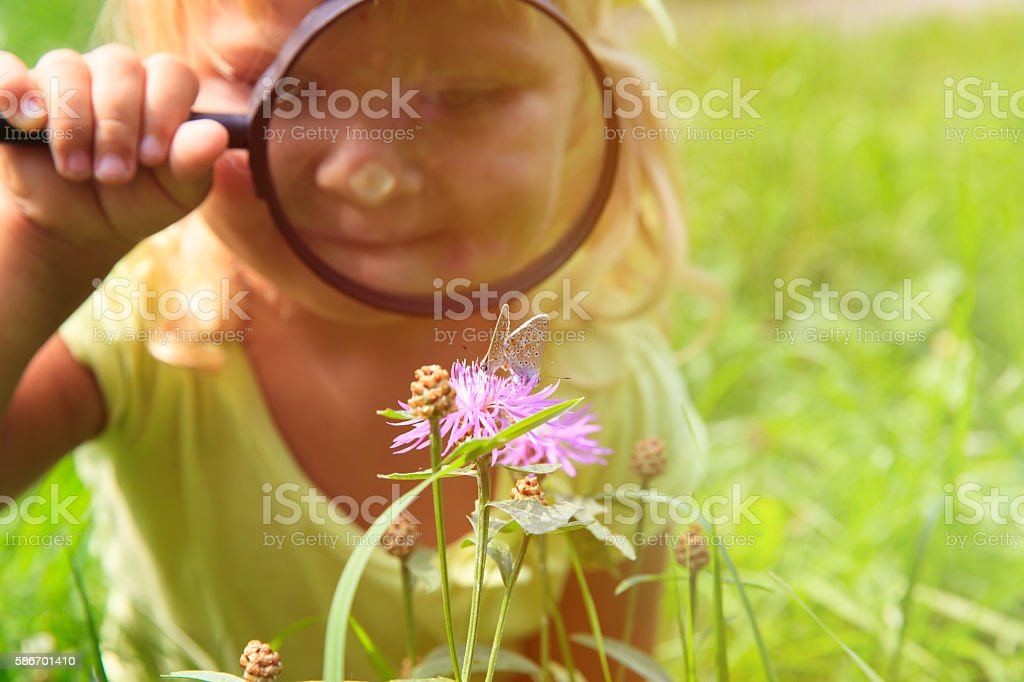 Little girl examining batterfies on flower using magnifying glass stock photo