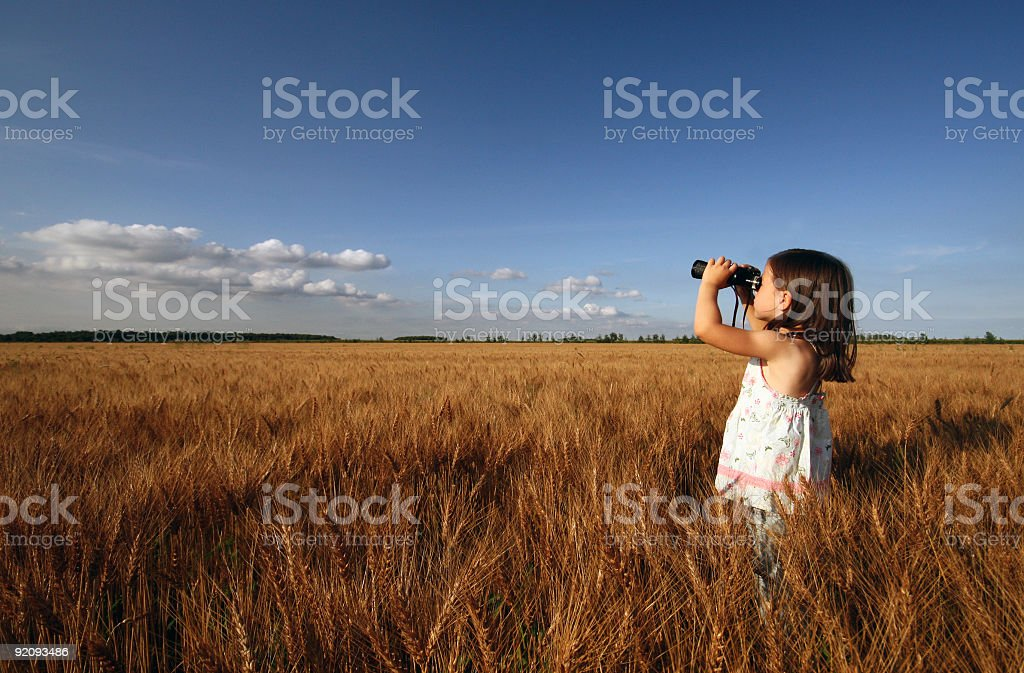 Little girl exploring through a wheat field royalty-free stock photo