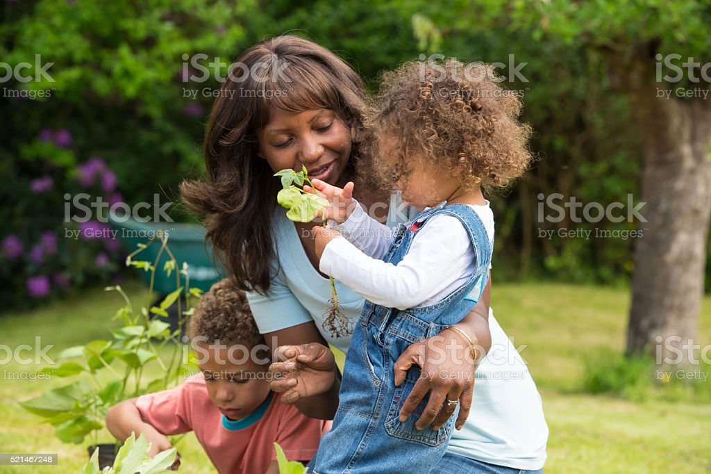 Little Girl Fascinated By A Bean Plant stock photo