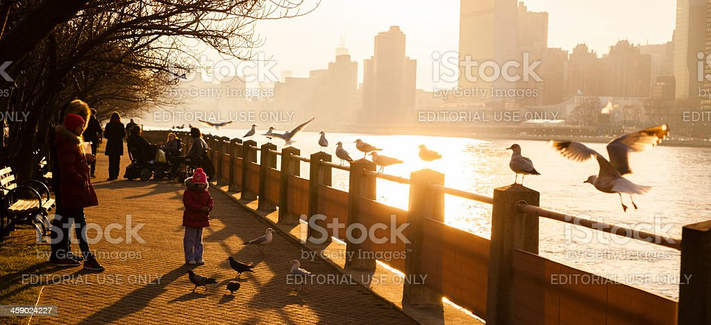 Little girl feed a seagulls royalty-free stock photo