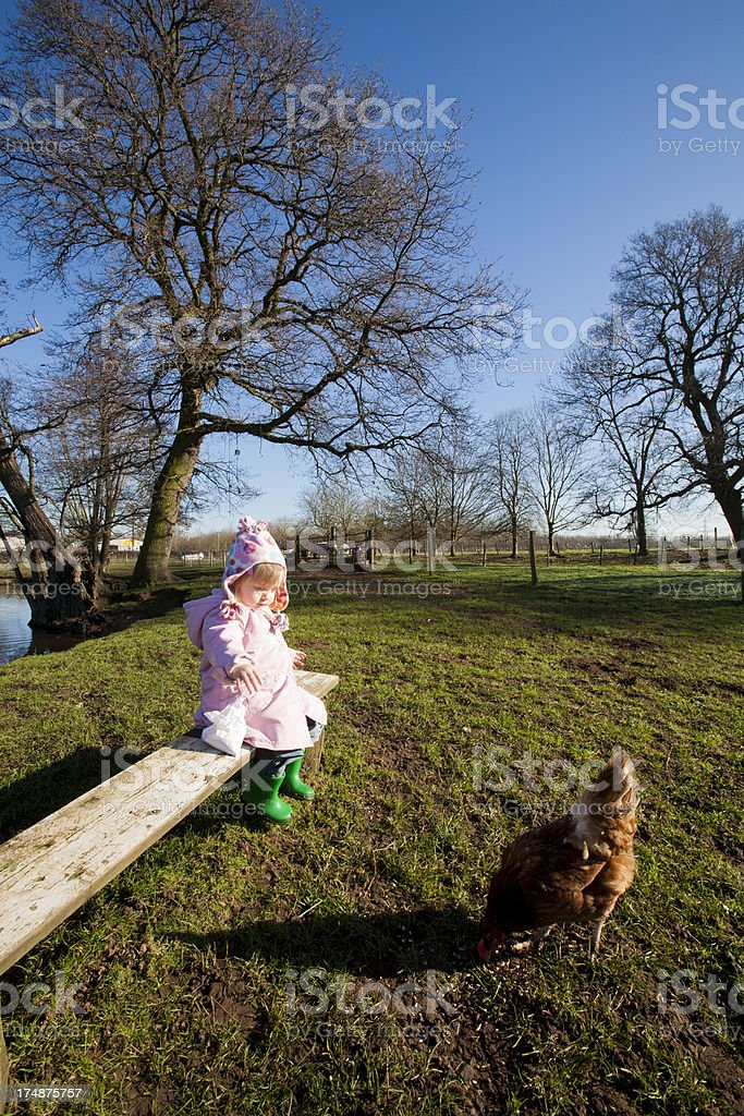 Little girl feeding chickens in a petting farm royalty-free stock photo