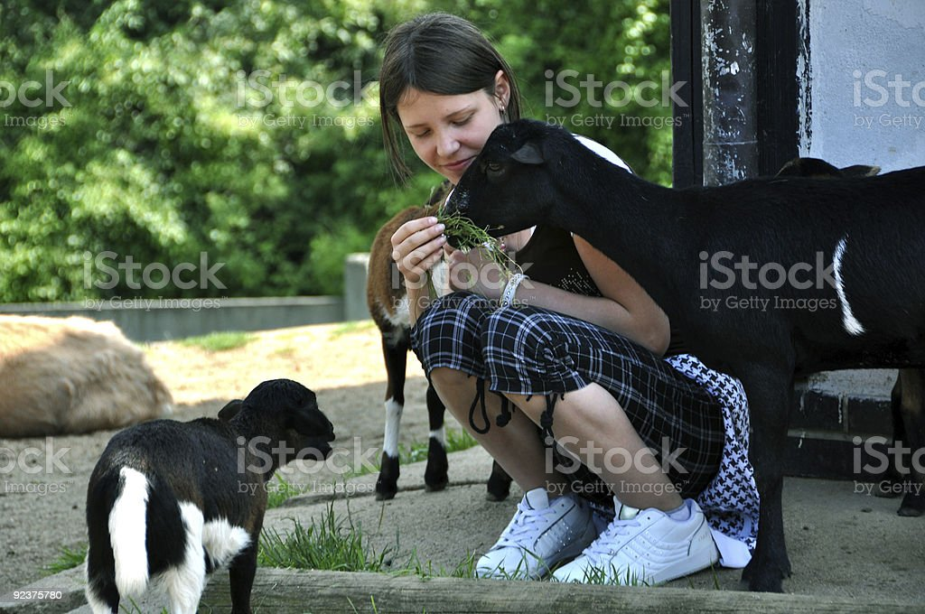 Little girl feeding goats royalty-free stock photo