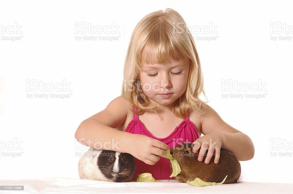 Little girl feeding her guinea pigs on white background royalty-free stock photo