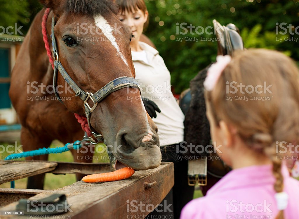 Little Girl Feeding Horse With Carrot. royalty-free stock photo