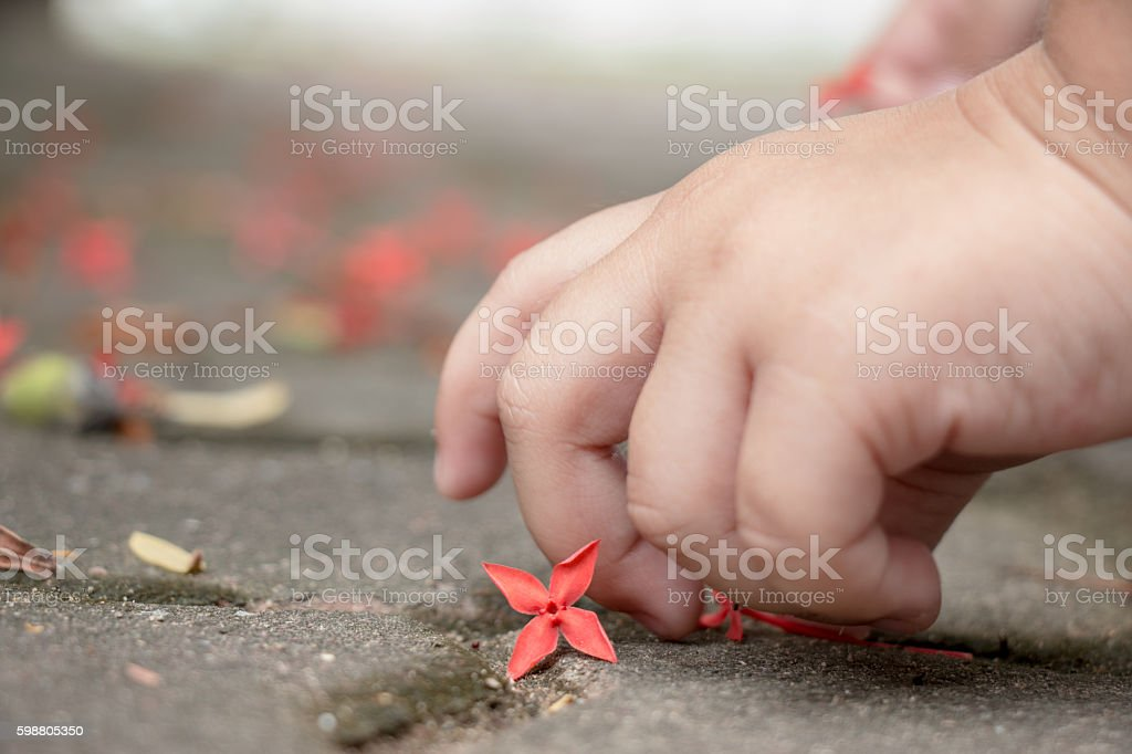 Little girl hand pick up the red flower. stock photo