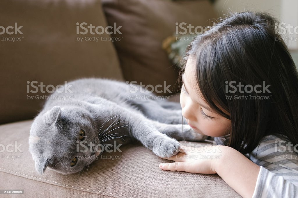 Little girl hanging out with her Scottish Fold cat stock photo