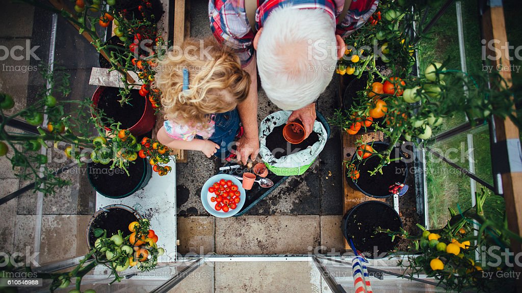 Little Girl Helping Grandad with the Gardening stock photo