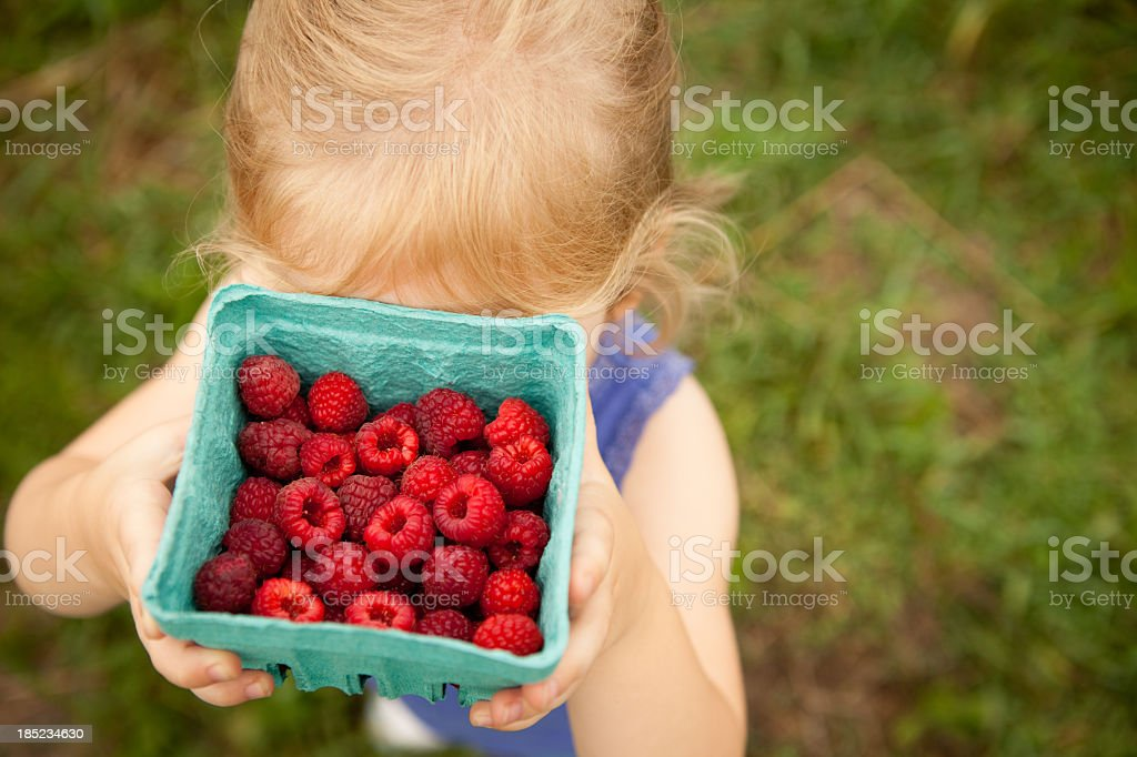 Little Girl Hiding Face Behind Carton of Raspberries She Picked royalty-free stock photo