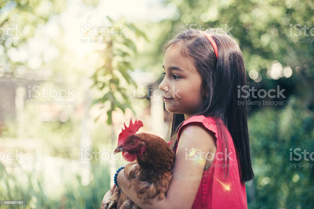 Little girl holding a brown hen stock photo