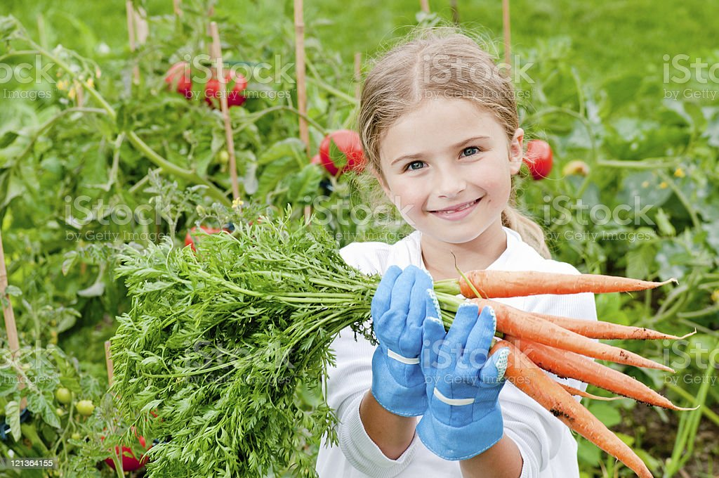 Little girl holding a bunch of carrots in a vegetable garden stock photo