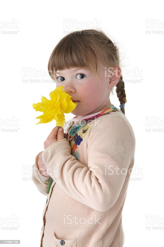 Little girl holding and smelling a daffodil against white background royalty-free stock photo
