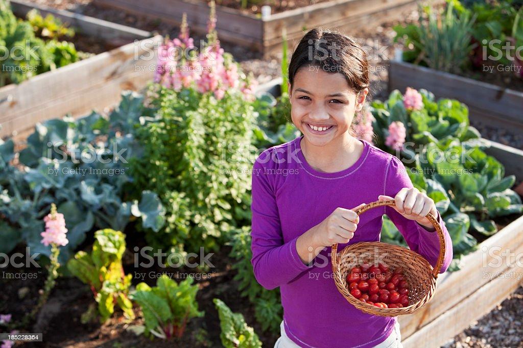Little girl holding basket of tomatoes stock photo