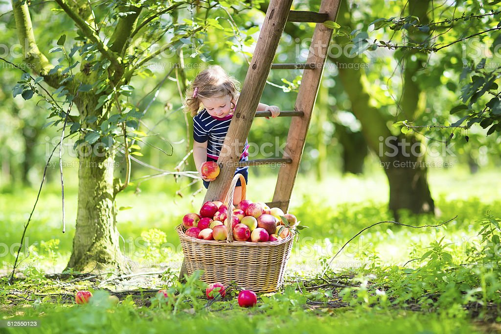 Little girl in an apple garden stock photo