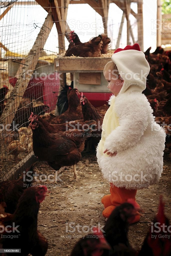 Little Girl in Chicken Costume with Chickens stock photo