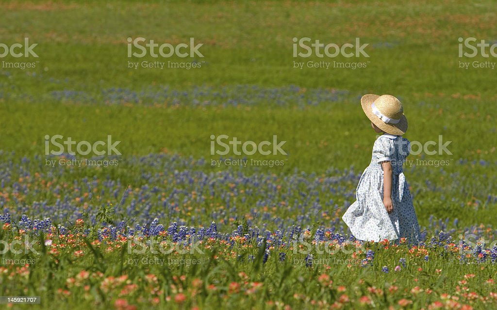 Little girl in field of bluebonnets and indian painbrush royalty-free stock photo